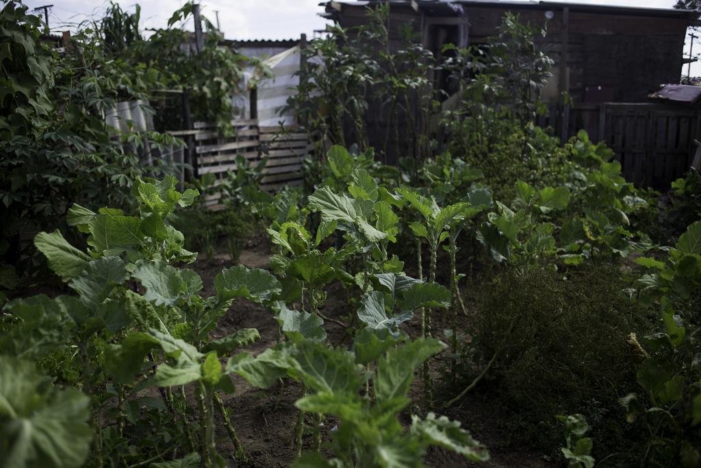 Hortas comunitárias no Jardim União